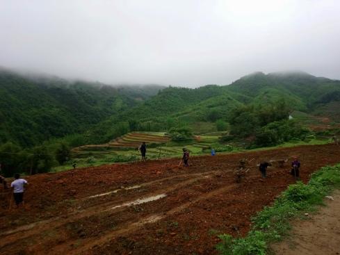 Rice paddies being prepared by hand