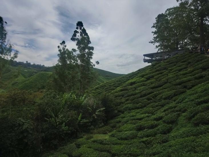 Tea factory cafe